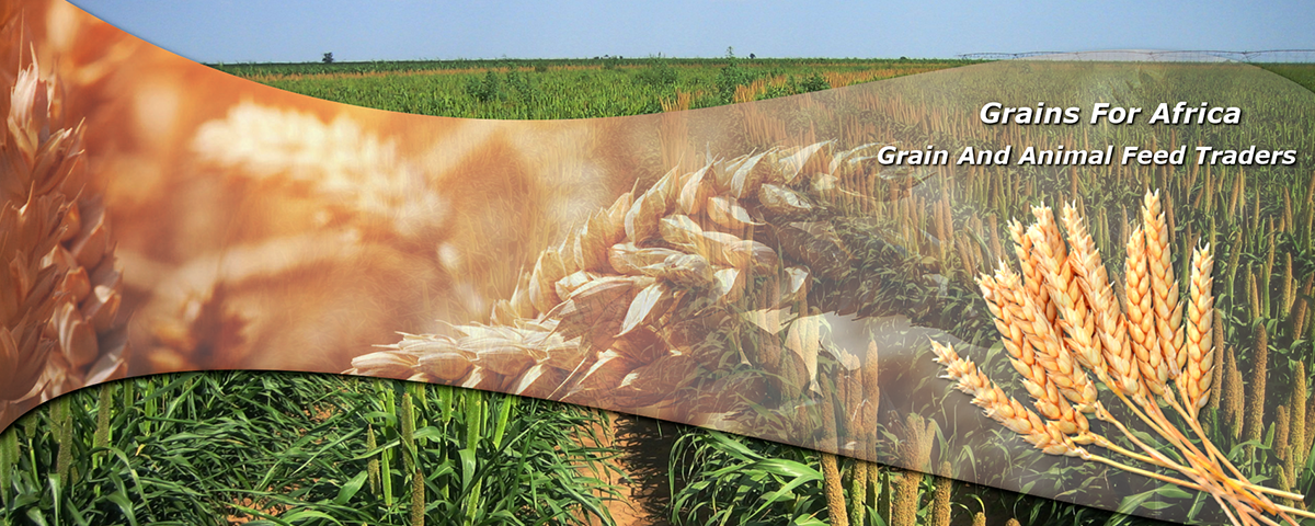 Grains-for-Africa
